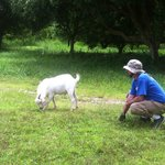 Me playing with the Goats!