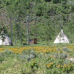 Teepees in the Summer