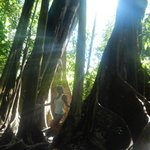 Copa de Arbol Beach and Rainforest Resortの写真