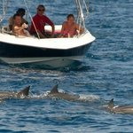 Dolphins in Tamarin bay - West coast
