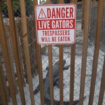 From their own gator garden.