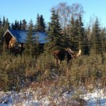 Caribou Crossing Cabinsの写真