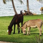 Resort horse & donkey