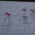 Camargue – flamingoes nesting area