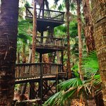 Rainforest Walk Tower