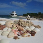 Seashells from Eco Tour to Boca Grande