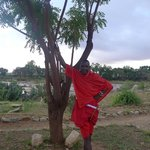 A wonderful Maasai guide escorts you to your room