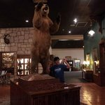 Bear Display