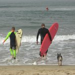 Sharing the surf at Huntington Dog Beach