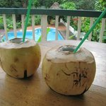 Coconuts and rum at the jungle dome!