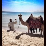 Camel on the beach front