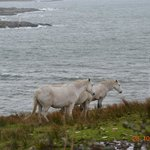 Clifden Bay Lodge의 사진