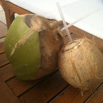 Coconut drinks from surrounding trees