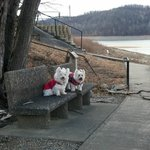 A seating area near Tygart Lake.