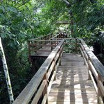The boardwalk high above the jungle