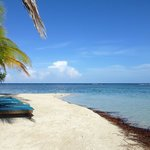 Pelican Beach - South Water Caye resmi
