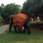 Elephant for onsite wedding