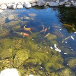 Beautiful fish pond.