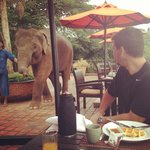 Breakfast with Am the baby elephant