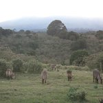 Фотография Ngorongoro Rhino Lodge