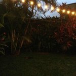 Magic lights in the backyard