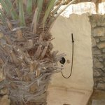Outdoor shower under a date tree in Villa 67