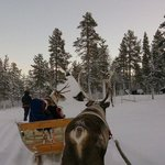 Awesome & Magical Reindeer Ride & Aurora !
