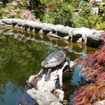fish pond with turtle at Marian's Seaside Retreat