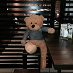 Meet Todd the Bear in the restaurant