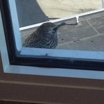 European Starling joining us for breakfast.