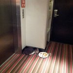 These plates were on the floor first outside of the room, and then near the elevator, for ~36 hr