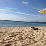 Ong Lang beach - private space for Freedomland guests (wild dog included) ��