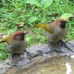 Foto de Jungle Lore Birding Lodge