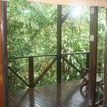 The deck is almost in the rain forest !