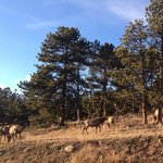 we saw plenty of Elk!