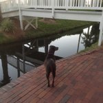 Chiquita looking for the paddle boats and swans!
