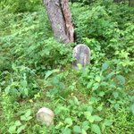 Remains of an old cemetery on a property hiking trail