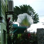 Photo de Casa Placencia Belize