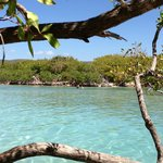 offshore island, mangrove channel; crowded on Easter week but great excursion