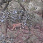 Photo de Hotel Green View Ranthambhore
