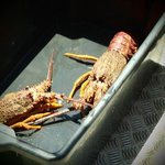 the caught crayfish :) scary things!