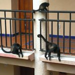 Monkeys walking right outside our bedroom door :)