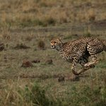 Foto Cheetah Tented Camp