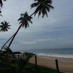 view of the beach, coconut palms galore