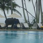 Baby elephant valentine visits twice everyday