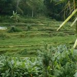 Photo de Puri Sawah