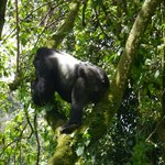 Foto de Clouds Mountain Gorilla Lodge