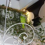 A parrot in the Tapas bar