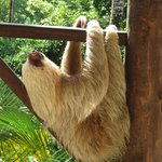 2 toed sloth on decking