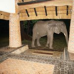 Foto de Mfuwe Lodge - The Bushcamp Company